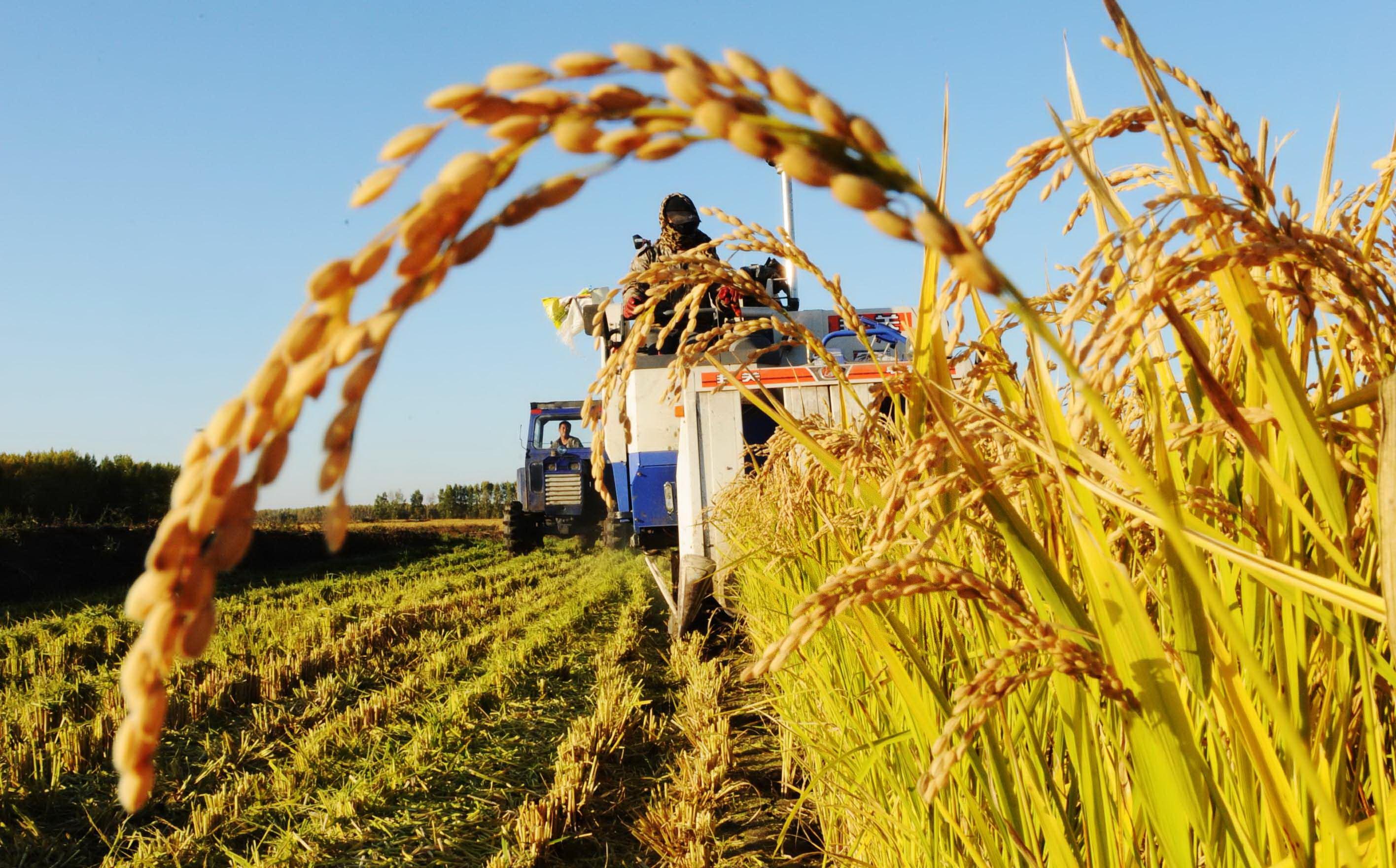 中央农办秘书局副局长解读今明两年三农工作必须完成的硬任务
